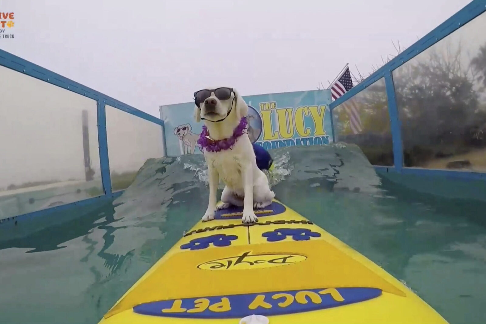 surfing dog for amazon pets eperiential marketing los angeles